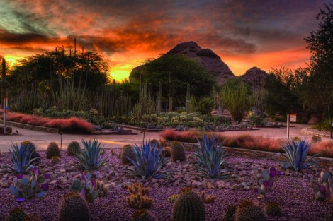 The Desert Botanical Gardens