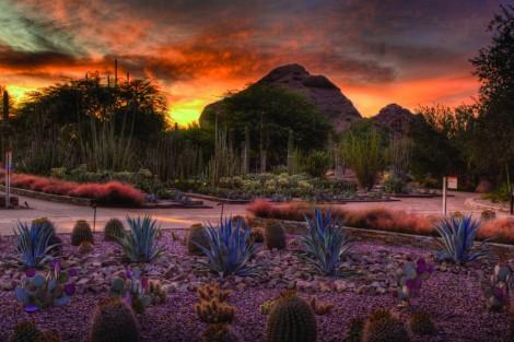 The Desert Botanical Gardens